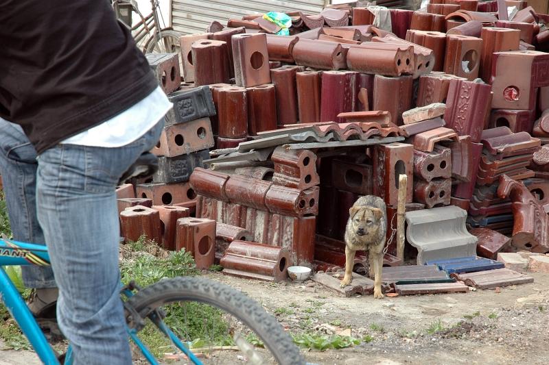 Dog house-© Rogier Vermeulen