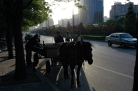 Cart and horse at third ring road, Beijing